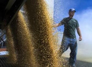 Billion Dollar Wheat