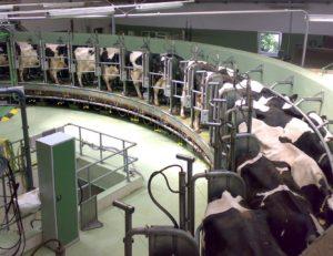 Dairy4